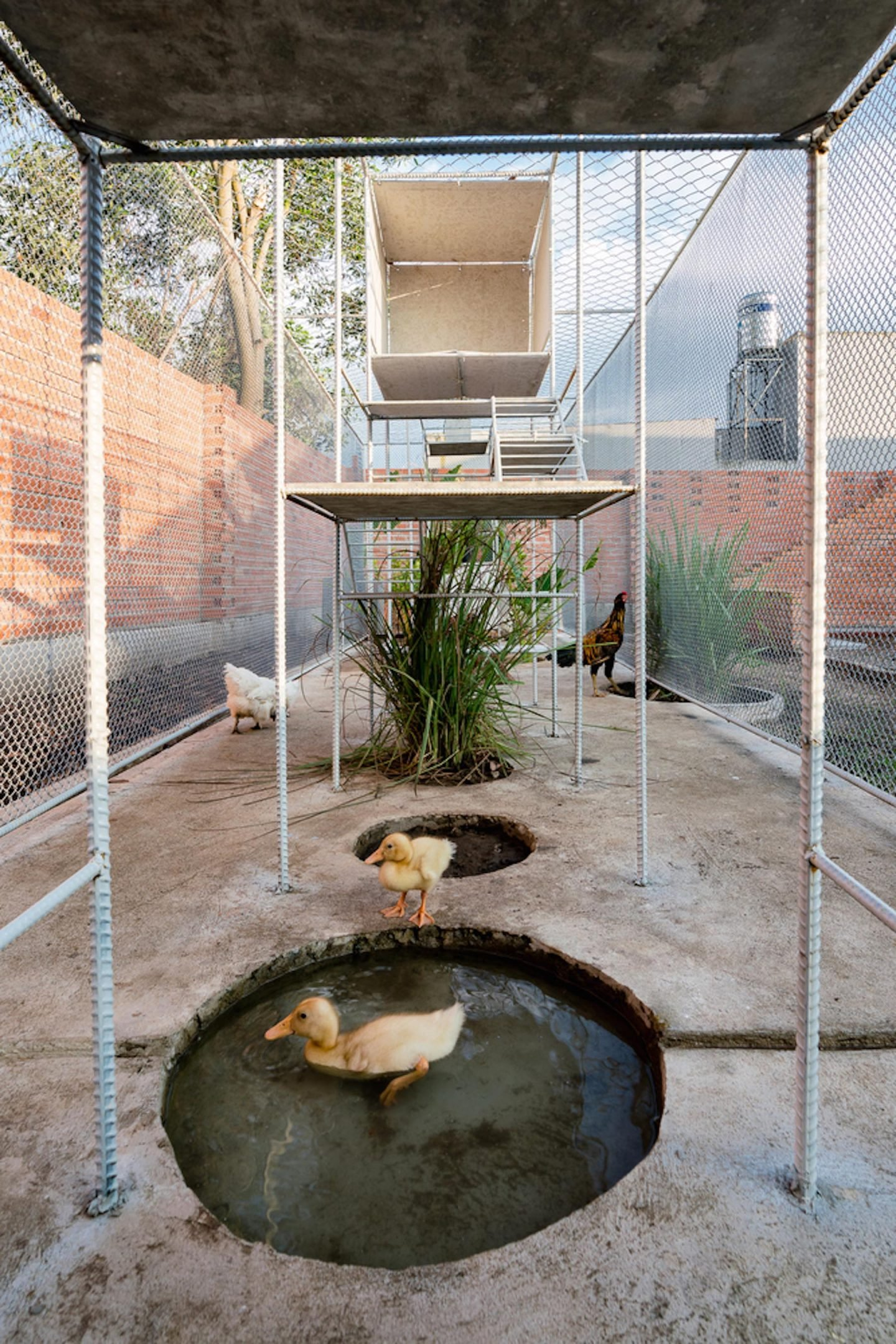 iGNANT-Architecture-Tropical-Space-Chicken-House-45