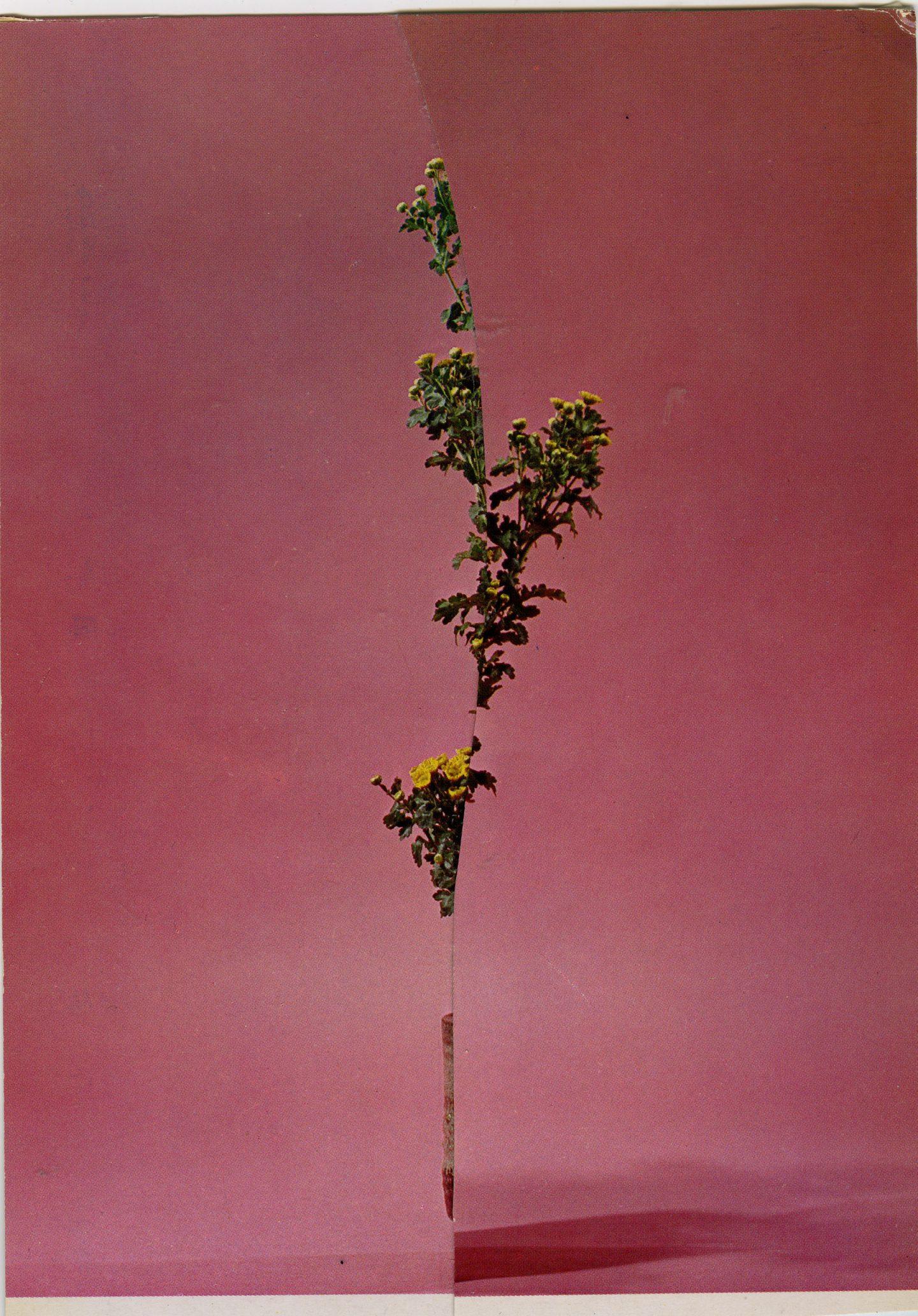iGNANT-Art-Nicola-Kloosterman-Ikebana-003