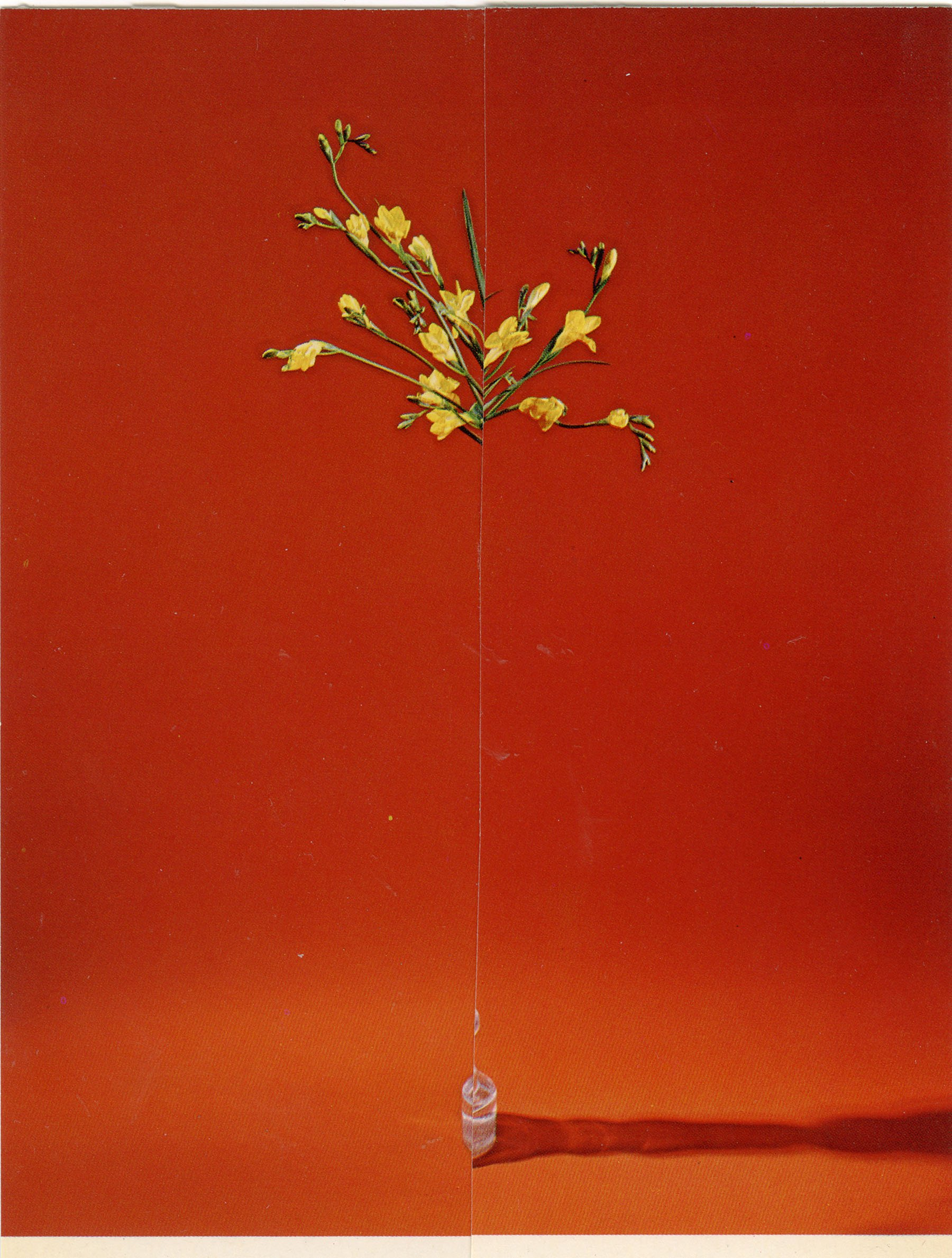 iGNANT-Art-Nicola-Kloosterman-Ikebana-004