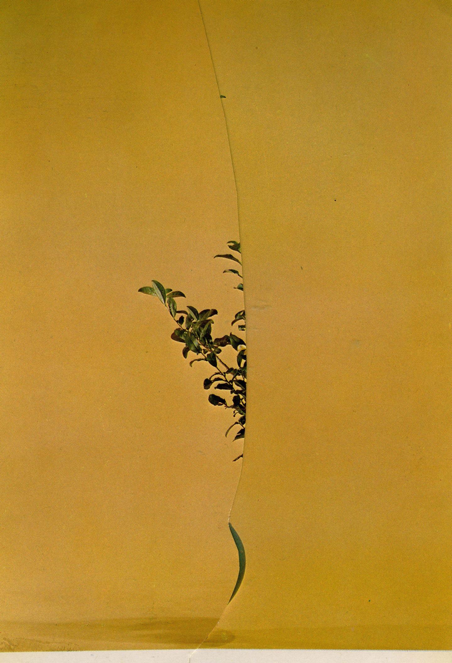 iGNANT-Art-Nicola-Kloosterman-Ikebana-005