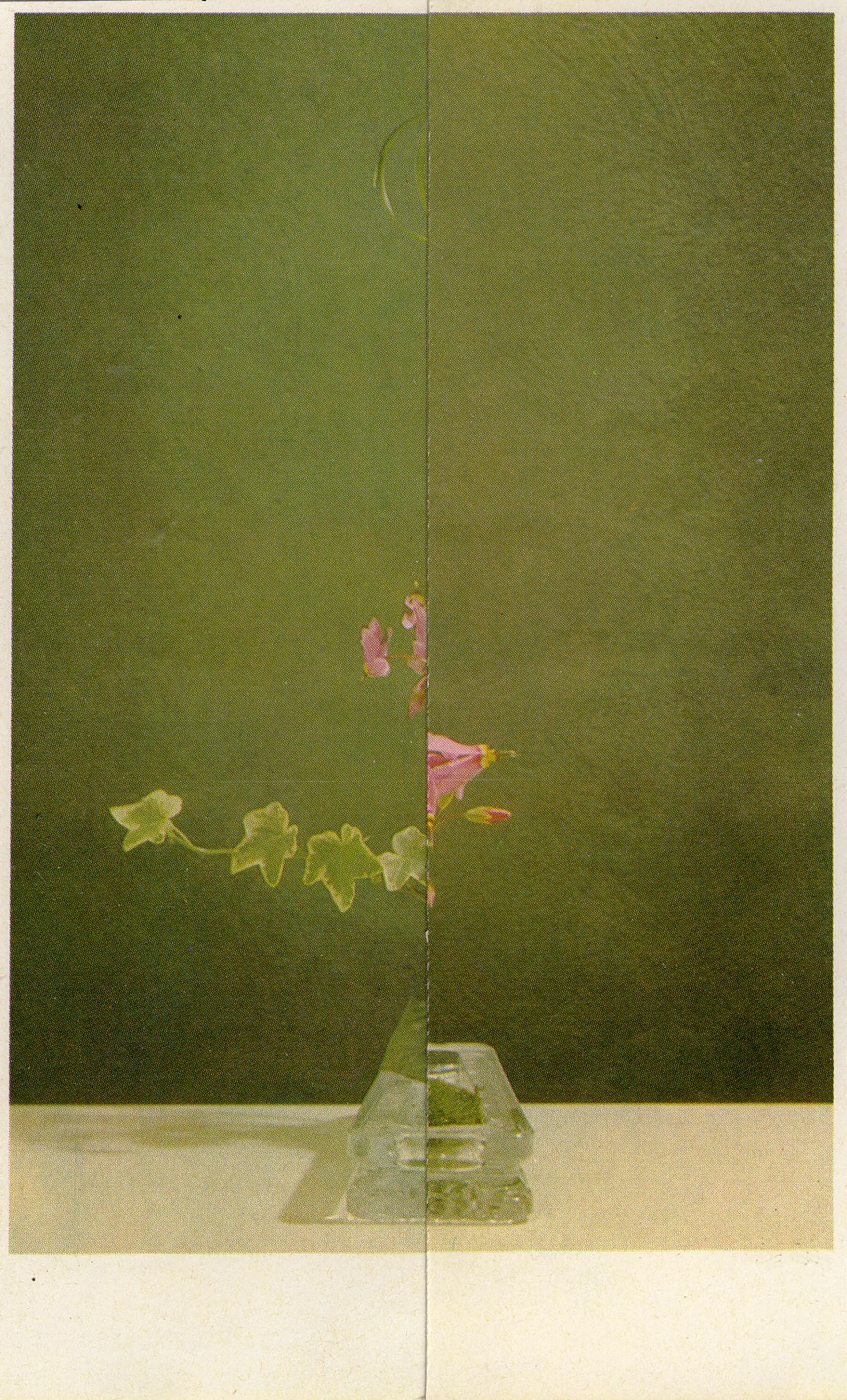 iGNANT-Art-Nicola-Kloosterman-Ikebana-006