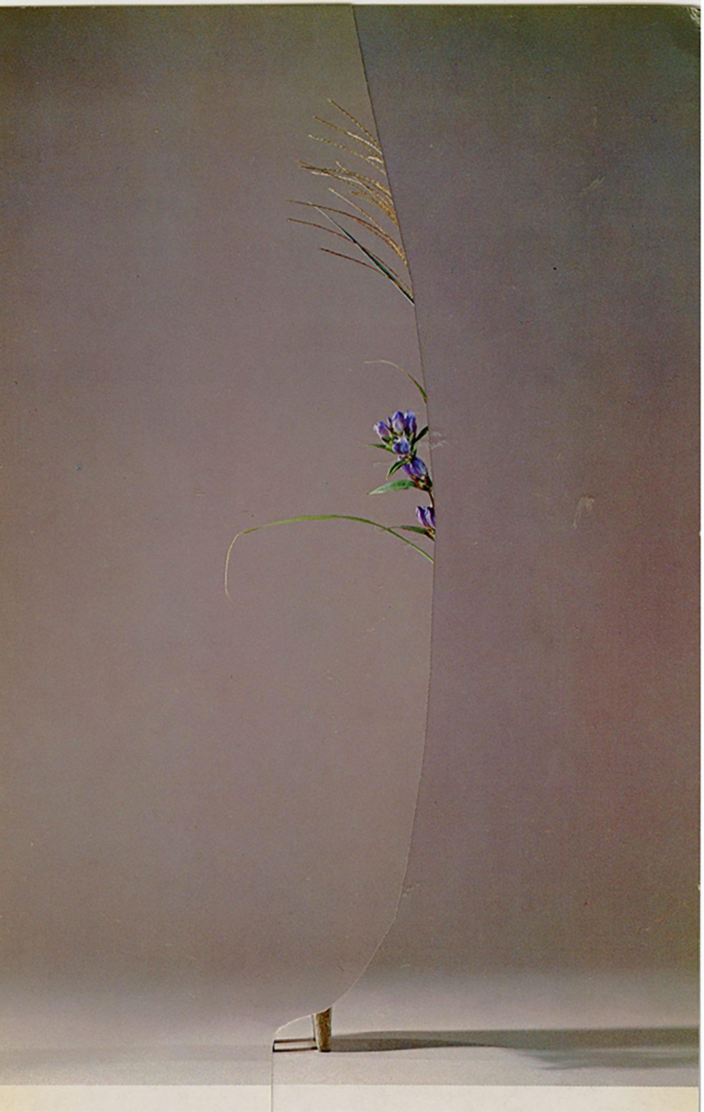 iGNANT-Art-Nicola-Kloosterman-Ikebana-007
