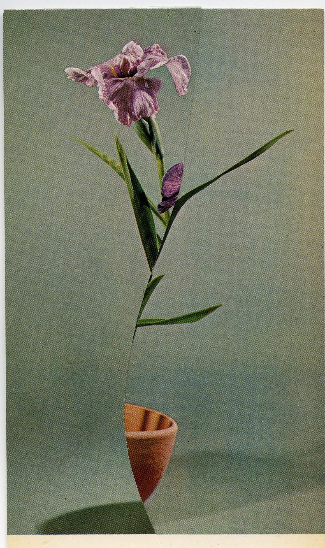 iGNANT-Art-Nicola-Kloosterman-Ikebana-008