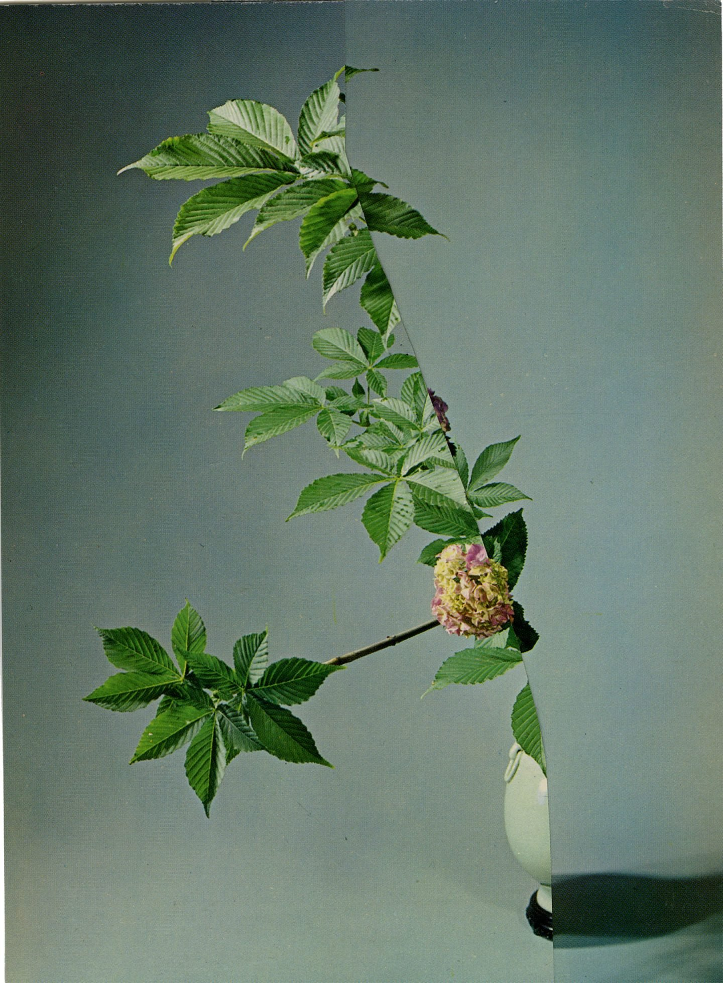 iGNANT-Art-Nicola-Kloosterman-Ikebana-009