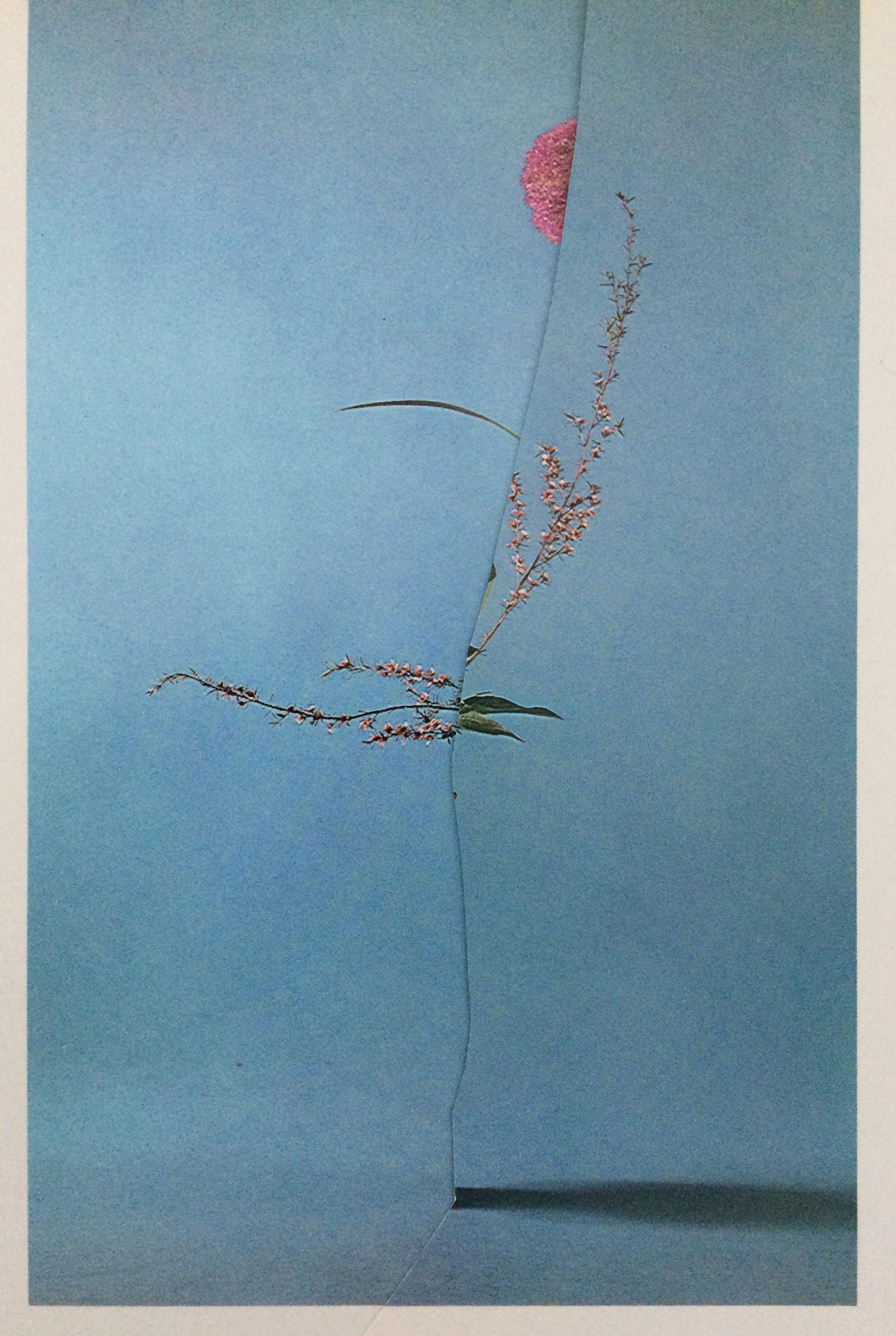 iGNANT-Art-Nicola-Kloosterman-Ikebana-010