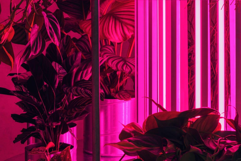 iGNANT-Design-Studio-David-Thulstrup-Tableau-Flower-Shop-006