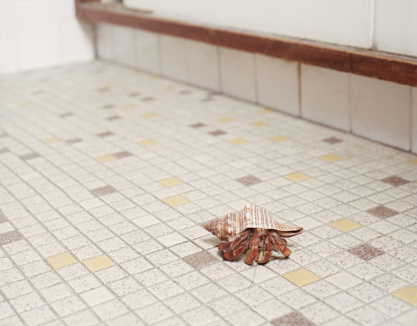 iGNANT-Photography-Areca-Roe-Housebroken-25