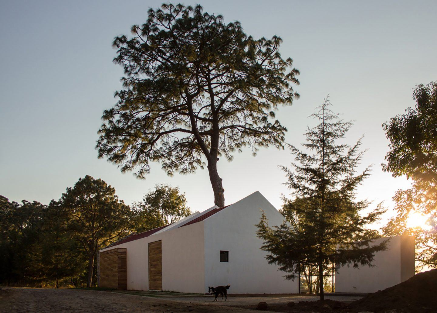 iGNANT-Architecture-EMA-House-Around-A-Pine-Tree-002