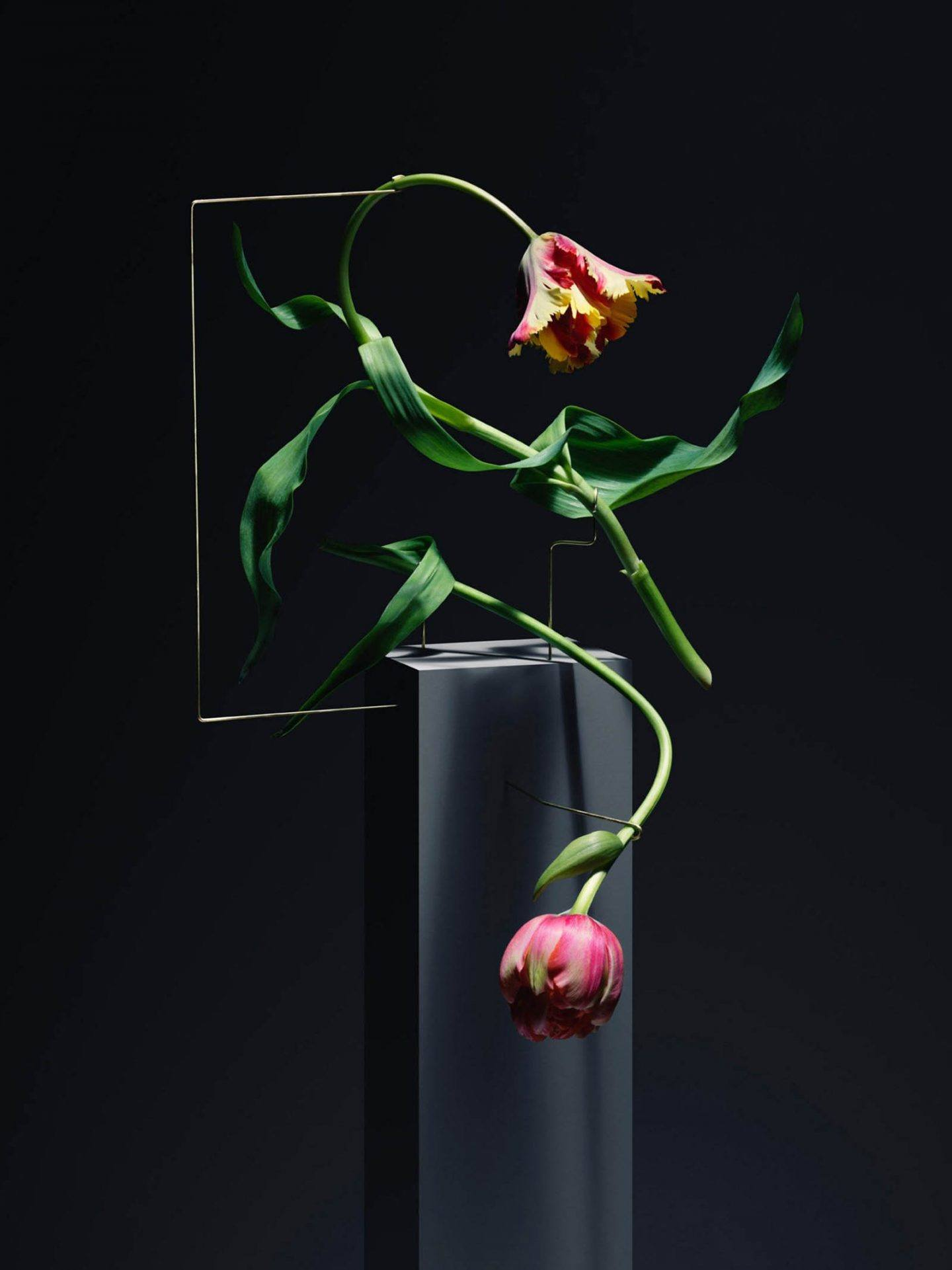 iGNANT-Art-Carl-Kleiner-Postures-004