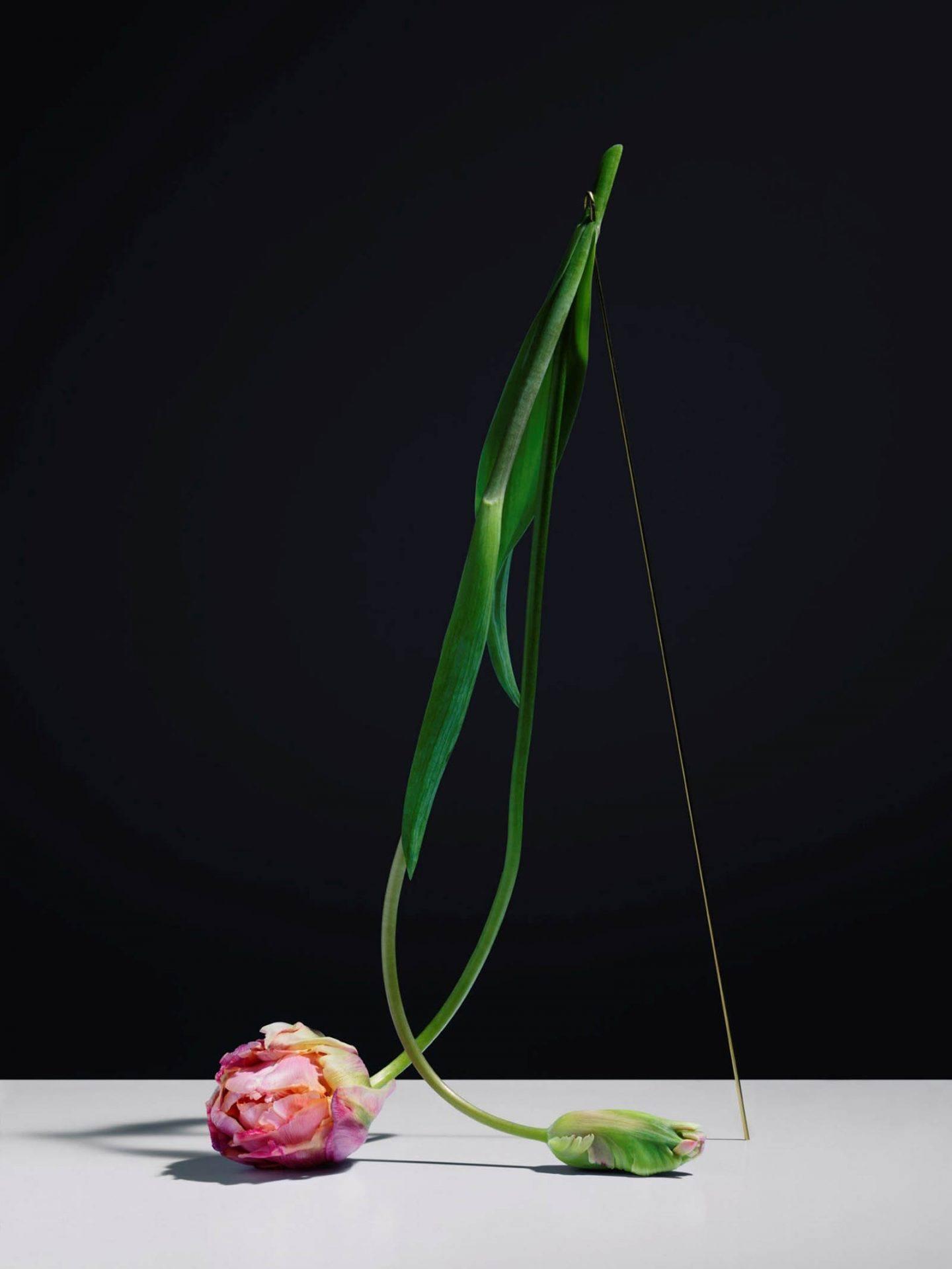 iGNANT-Art-Carl-Kleiner-Postures-006