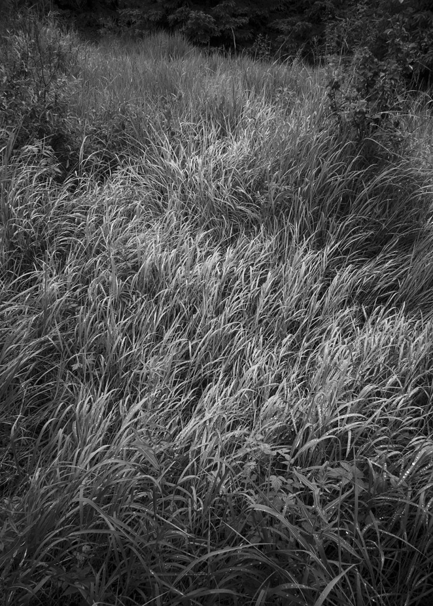 IGNANT-Photography-Louis-Perreault-Les-Affluents-0011