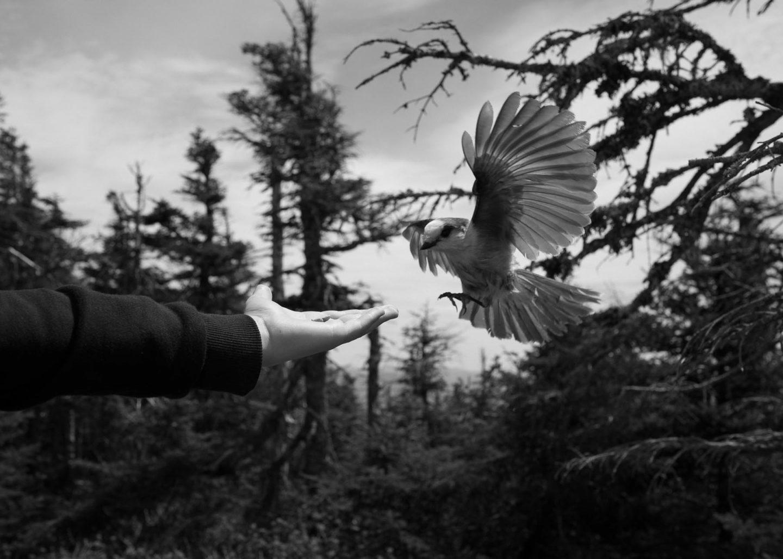 IGNANT-Photography-Louis-Perreault-Les-Affluents-004