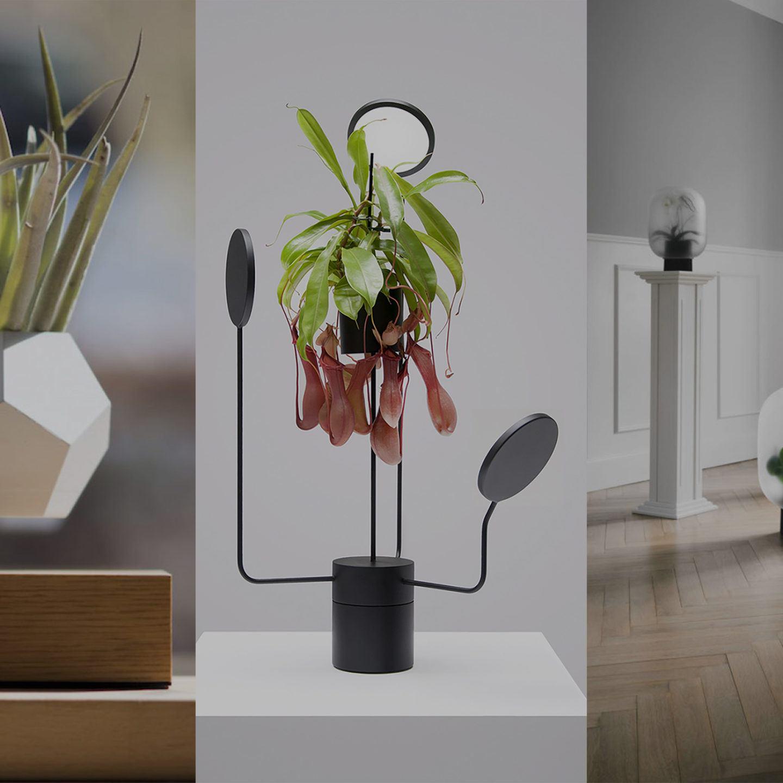 ignant-design-limbus-greenframe-pre