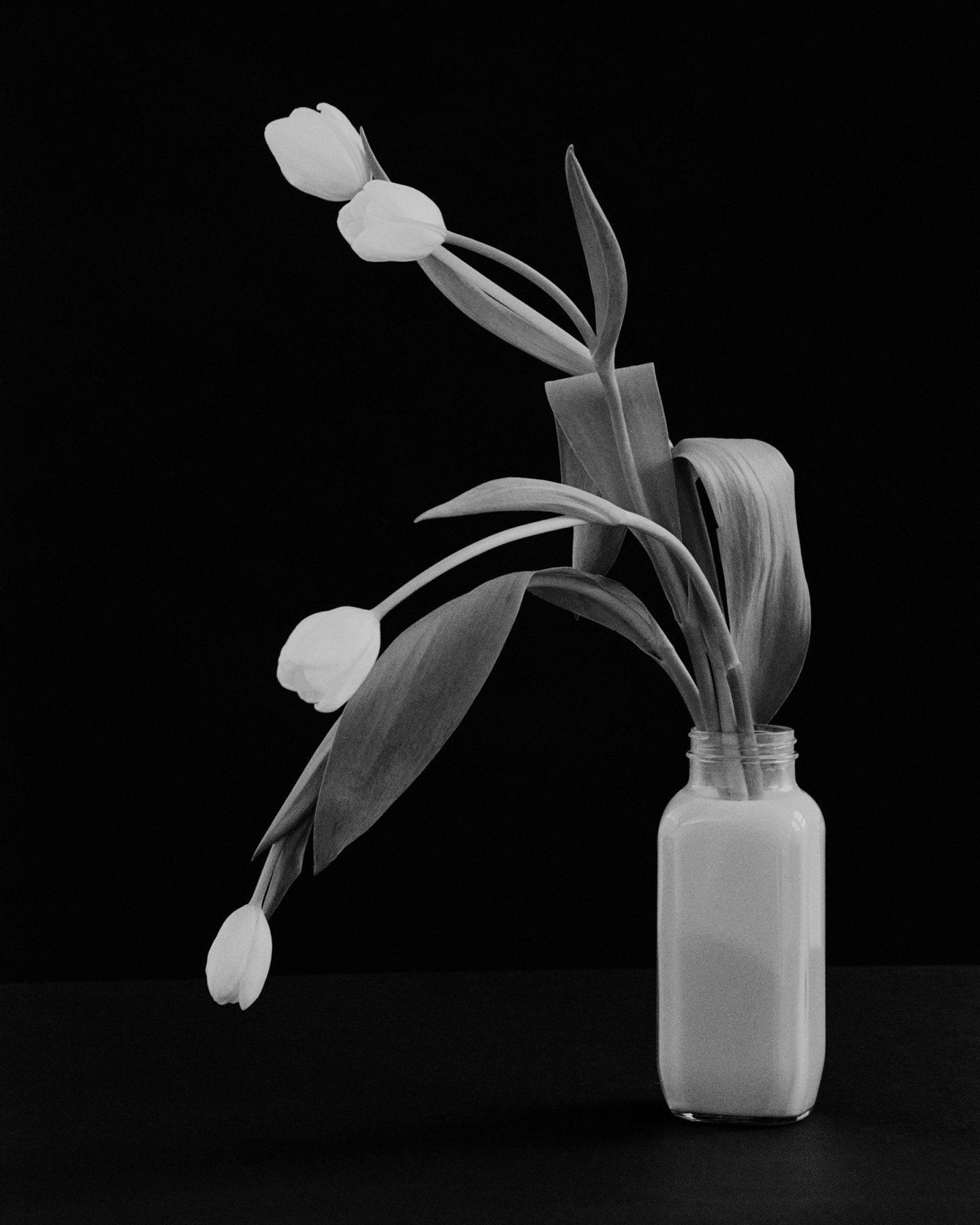 IGNANT-Photography-Brian-Kanagaki-Golden-Persimmons-2-014