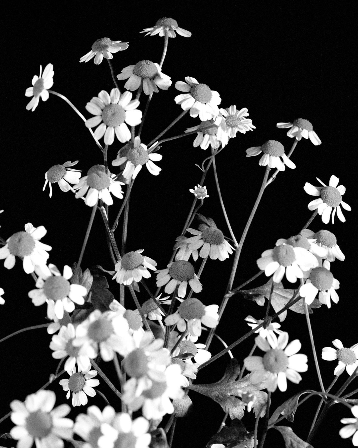 IGNANT-Photography-Brian-Kanagaki-Golden-Persimmons-2-015