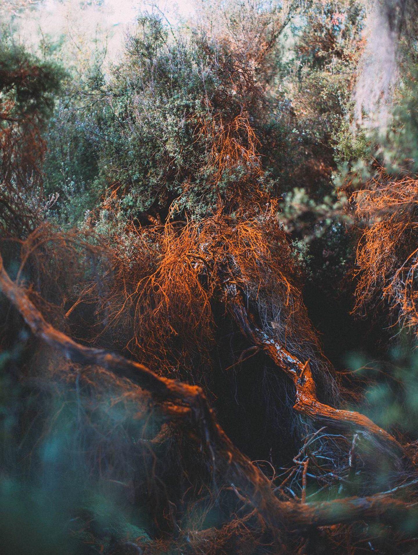 IGNANT-Photography-Chiara-Zonca-It-Devours-009