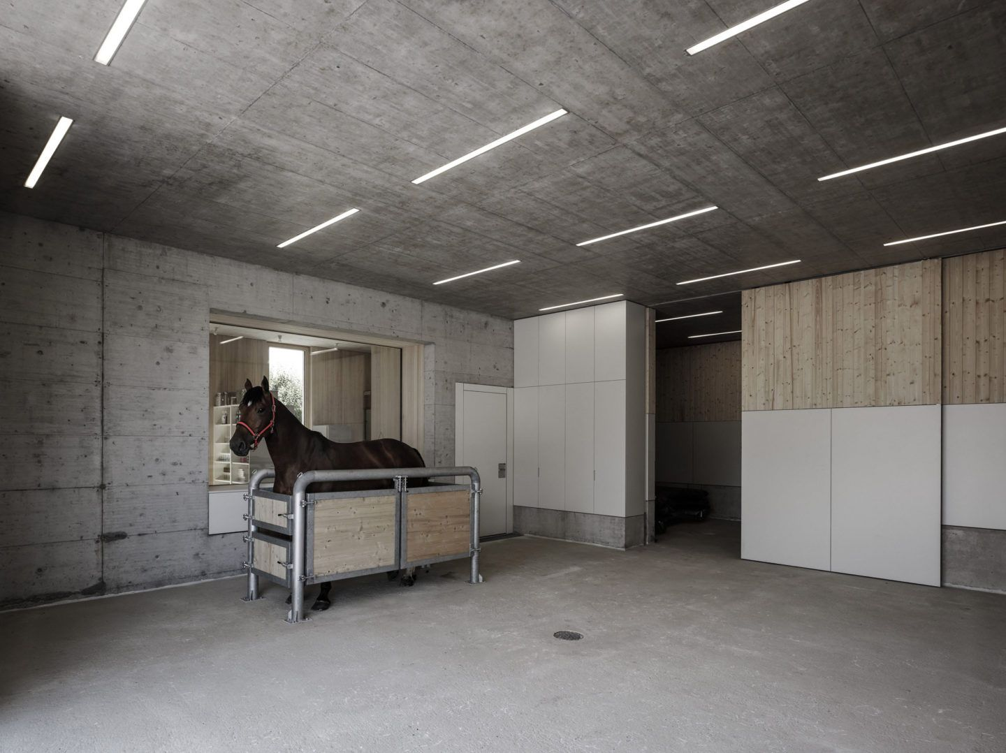 IGNANT-Architecture-Marte.Marte.-Architects-Veterinary-Clinic-7