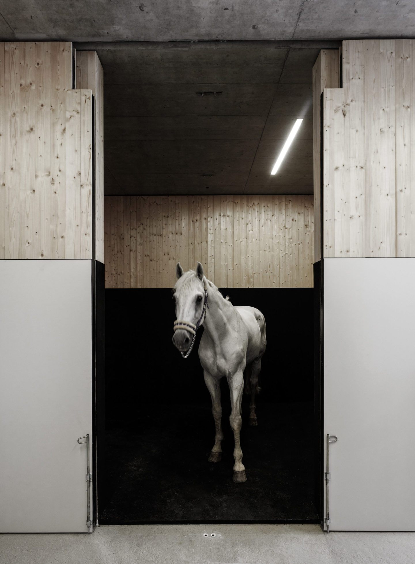 IGNANT-Architecture-Marte.Marte.-Architects-Veterinary-Clinic-8
