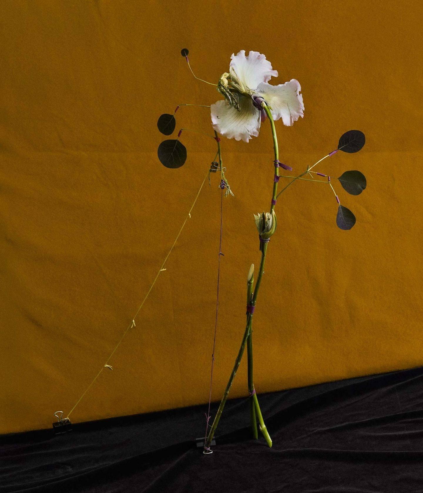 IGNANT-Art-Dominik-Tarabański-Roses-For-Mother-2