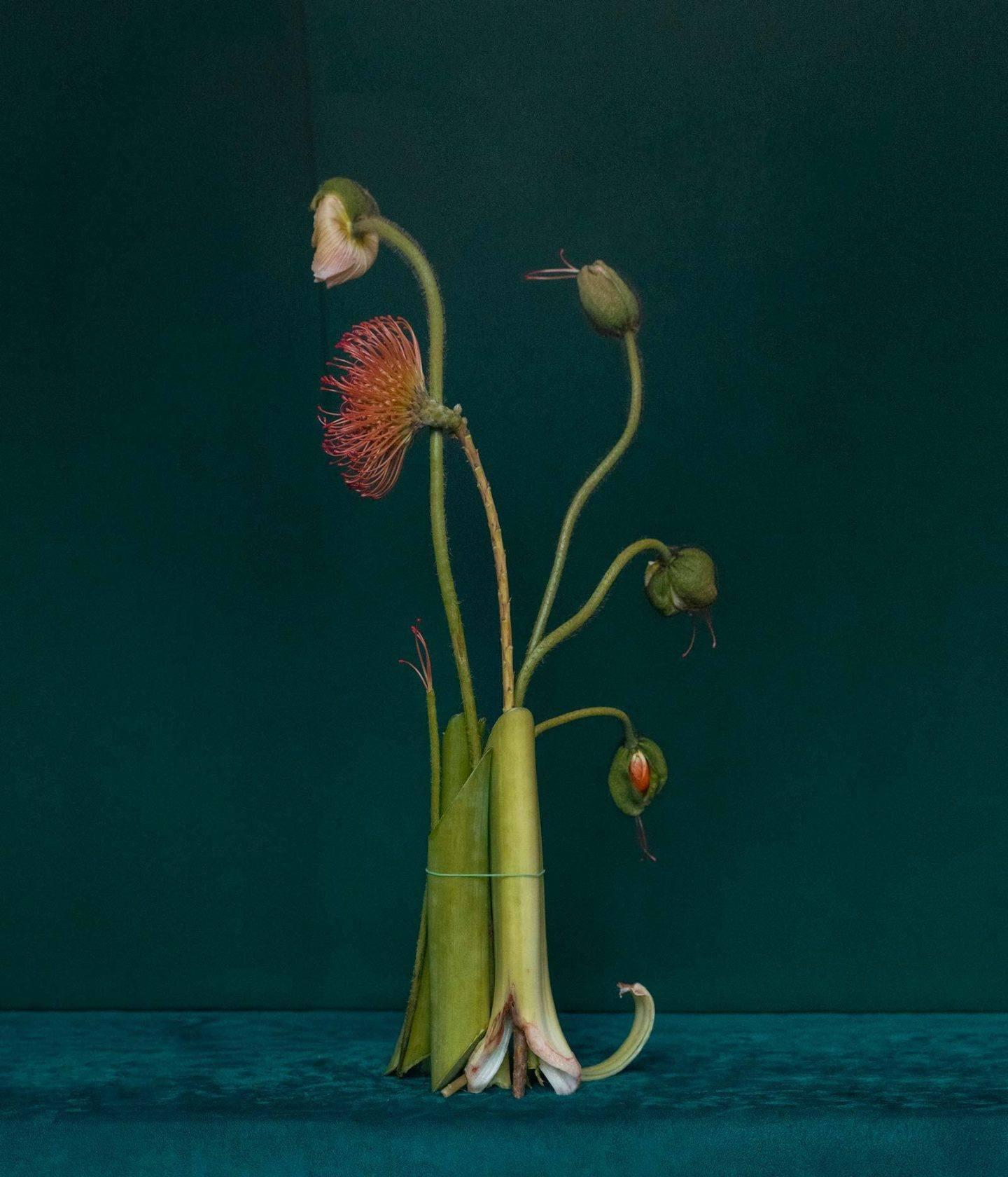 IGNANT-Art-Dominik-Tarabański-Roses-For-Mother-4