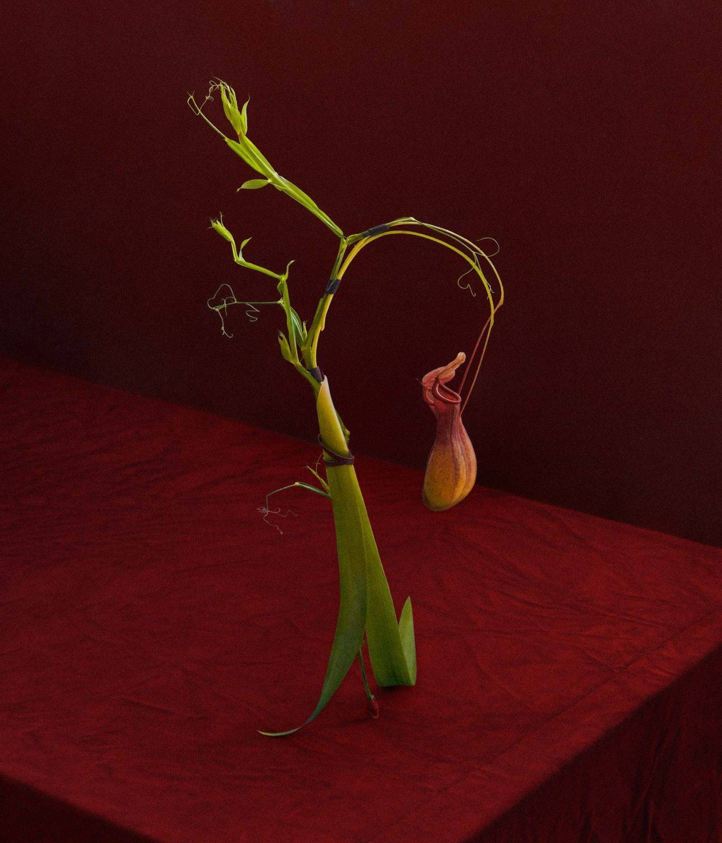 IGNANT-Art-Dominik-Tarabański-Roses-For-Mother-5