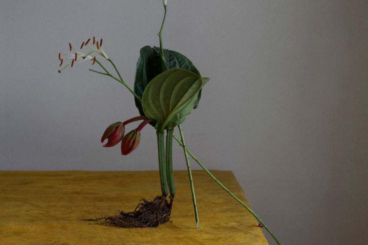 ignant-art-dominik-tarabanski-roses-for-mother-pre