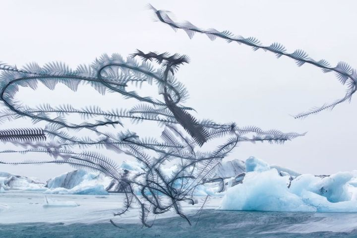 IGNANT-Photography-Xavi-Bou-Ornitographies-002