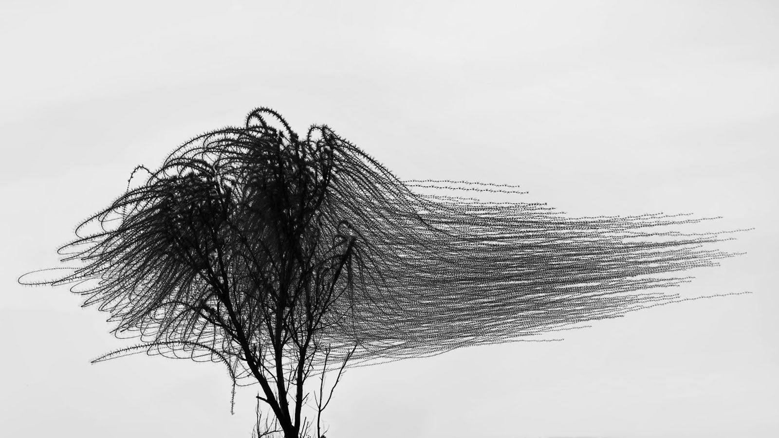 IGNANT-Photography-Xavi-Bou-Ornitographies-004