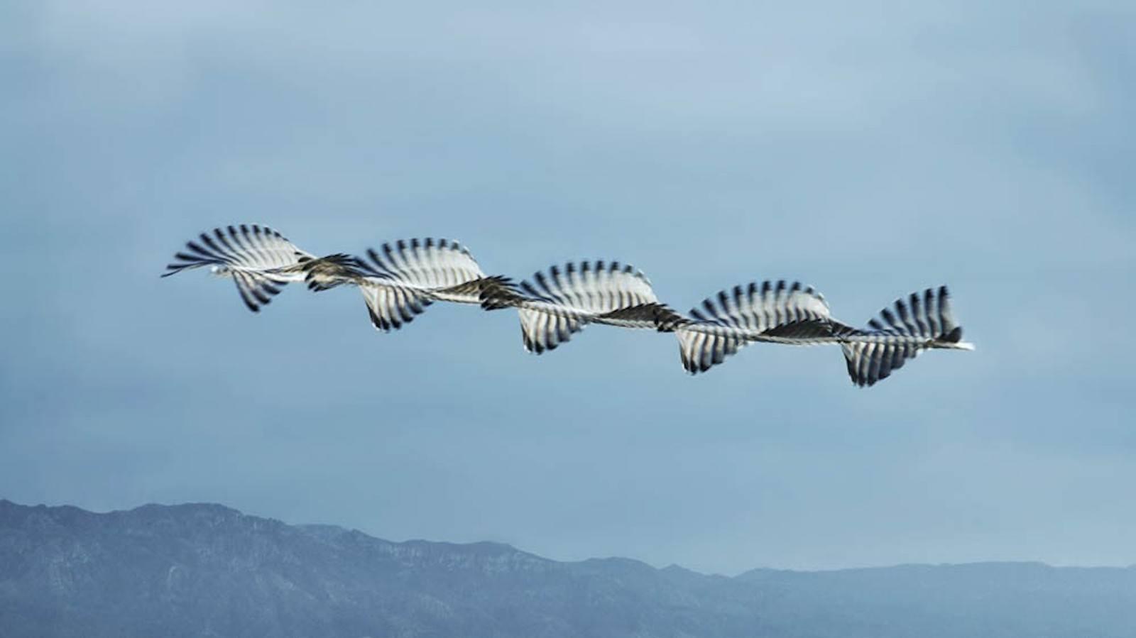 IGNANT-Photography-Xavi-Bou-Ornitographies-010