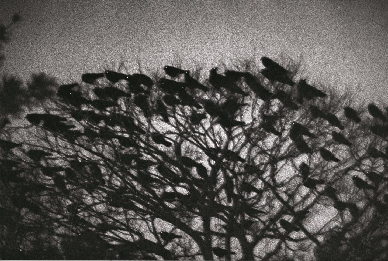 IGNANT-Print-Lena-Fritsch-Ravens-&-Red-Lipstick-Fukase-Masahisa