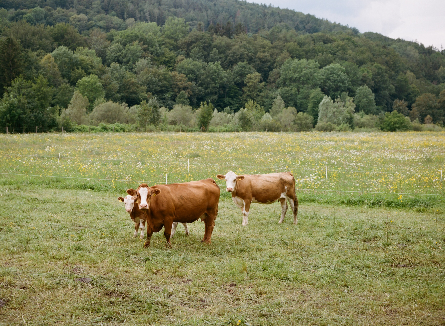 IGNANT-Travel-Best-Of-Road-Trips-Austria-Daniel-Gebhart-de-Koekkoek-03