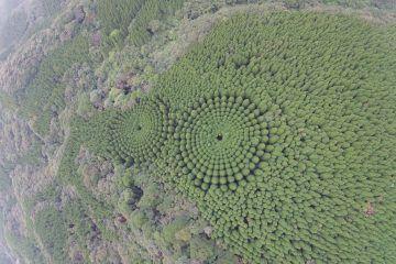 IGNANT-Art-Tree-Circle-001
