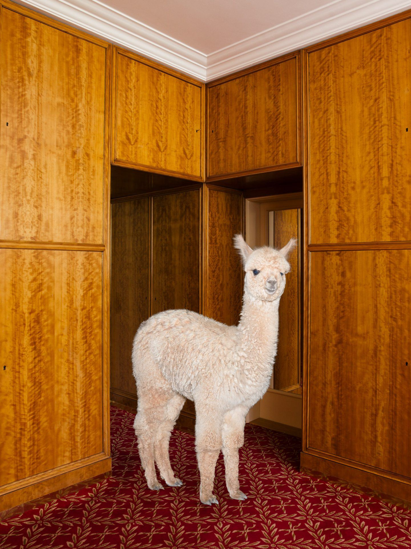 IGNANT-Photography-Daniel-Gebhart-De-Koekkoek-Better-Living-With-Alpacas-2-3