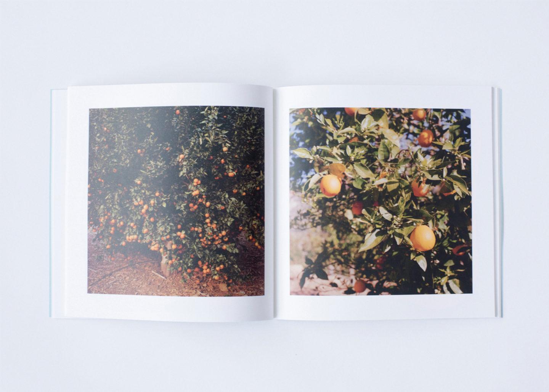 IGNANT-Print-Landon-Speers-Wild-Rose-Book-6