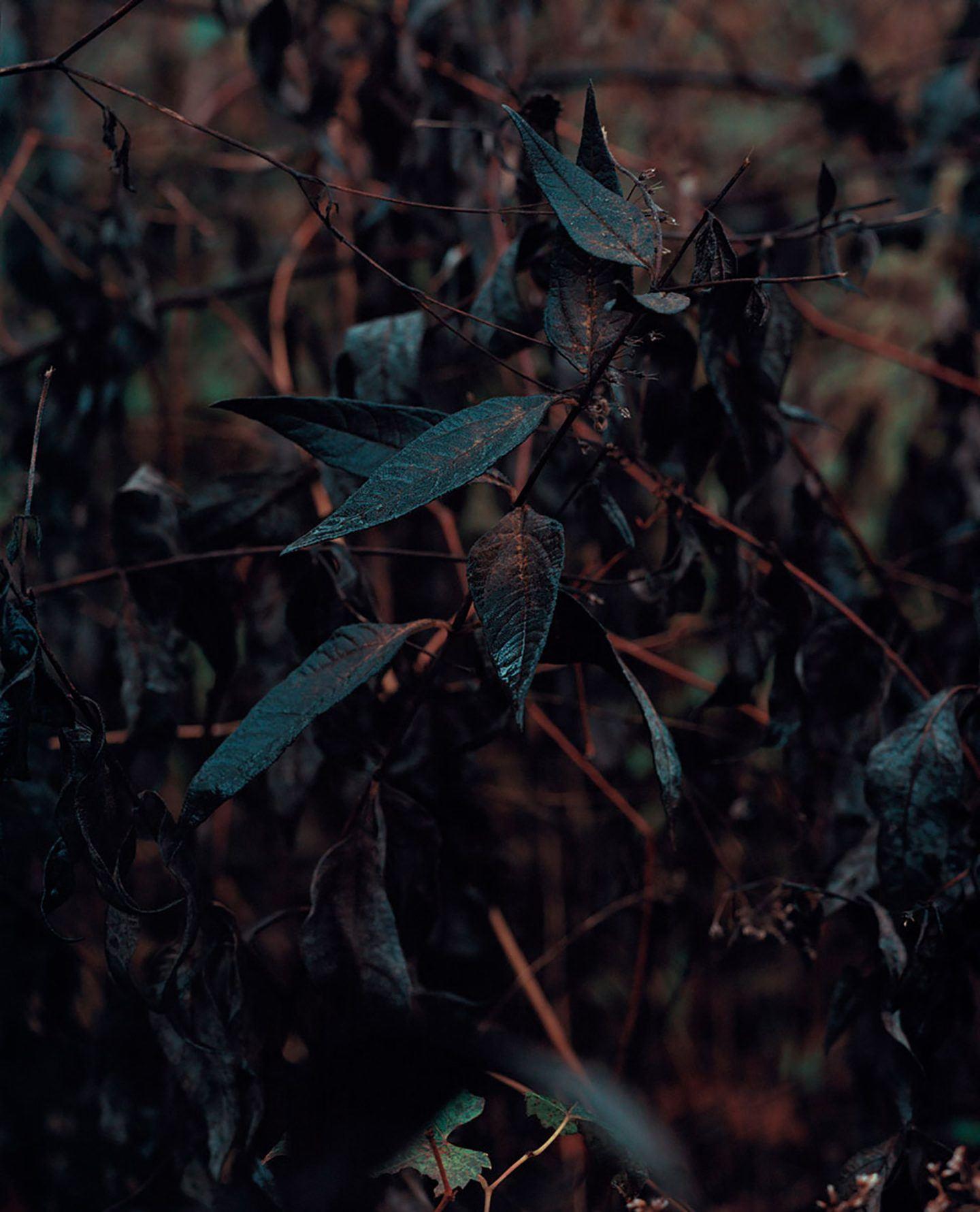IGNANT-Photography-Brendan-George-Ko-Nadadey-Weystid-1