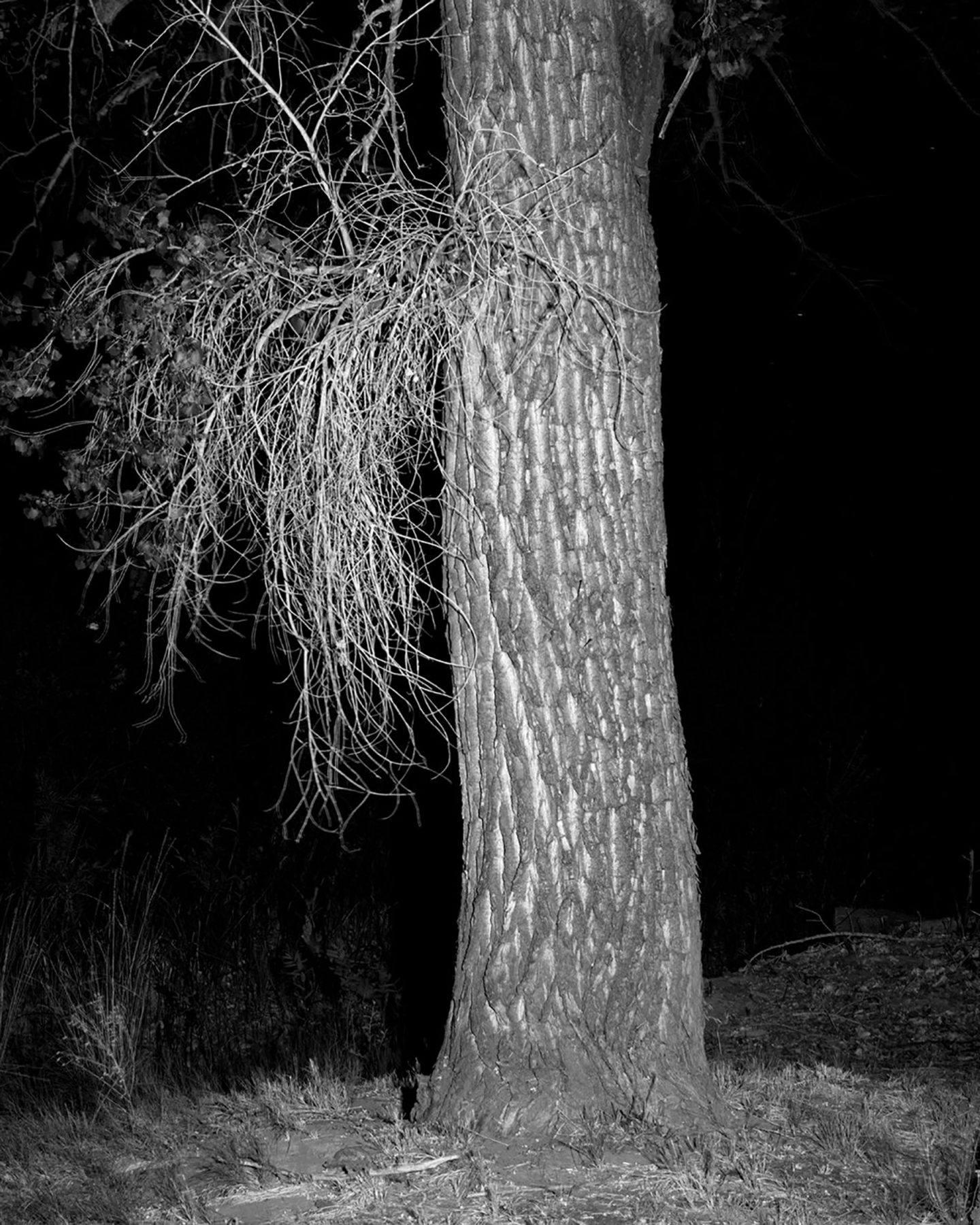 IGNANT-Photography-Kristine-Potter-Manifest-1