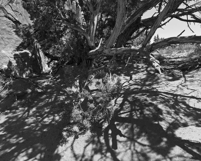 IGNANT-Photography-Kristine-Potter-Manifest-10