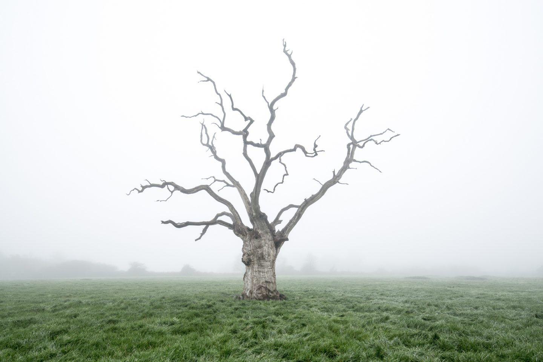 IGNANT-Photography-Luke-Hayes-Dead-Oaks-001