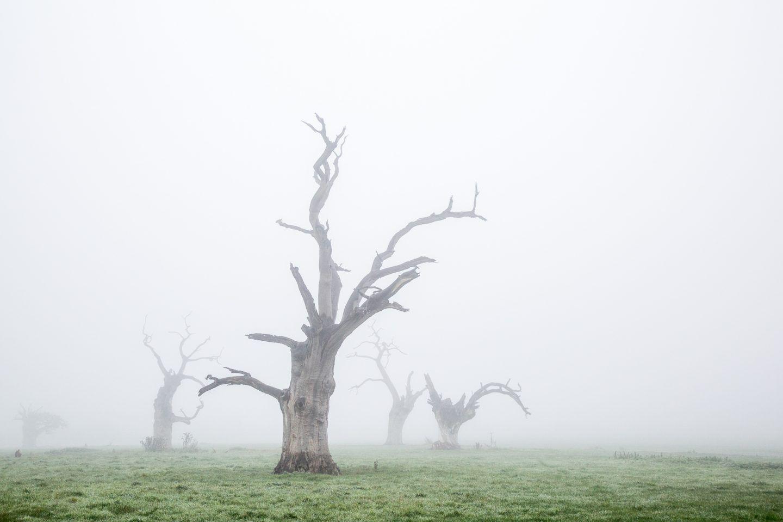 IGNANT-Photography-Luke-Hayes-Dead-Oaks-002