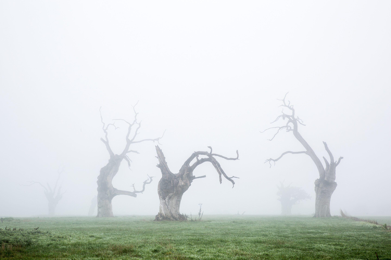IGNANT-Photography-Luke-Hayes-Dead-Oaks-003