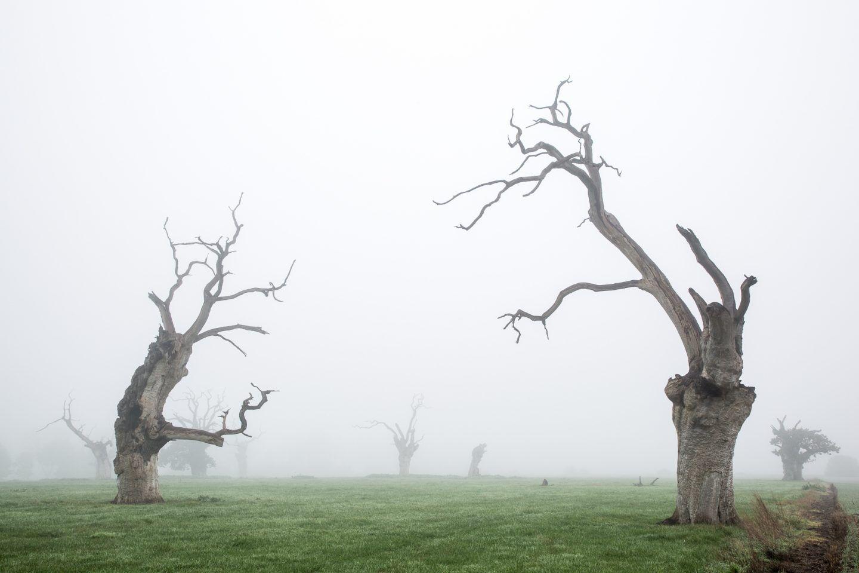 IGNANT-Photography-Luke-Hayes-Dead-Oaks-004