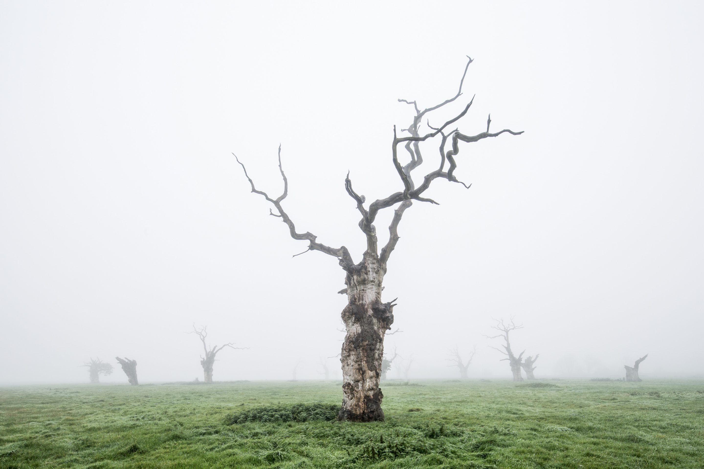 IGNANT-Photography-Luke-Hayes-Dead-Oaks-006