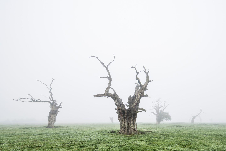 IGNANT-Photography-Luke-Hayes-Dead-Oaks-007