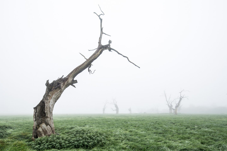 IGNANT-Photography-Luke-Hayes-Dead-Oaks-008