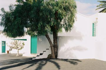 IGNANT-Photography-Arturo-Bamboo-Lanzarote-1