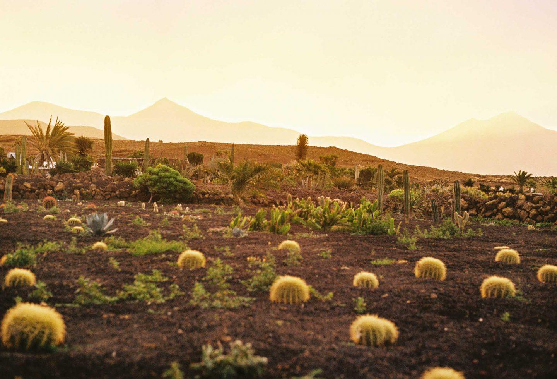 IGNANT-Photography-Arturo-Bamboo-Lanzarote-3