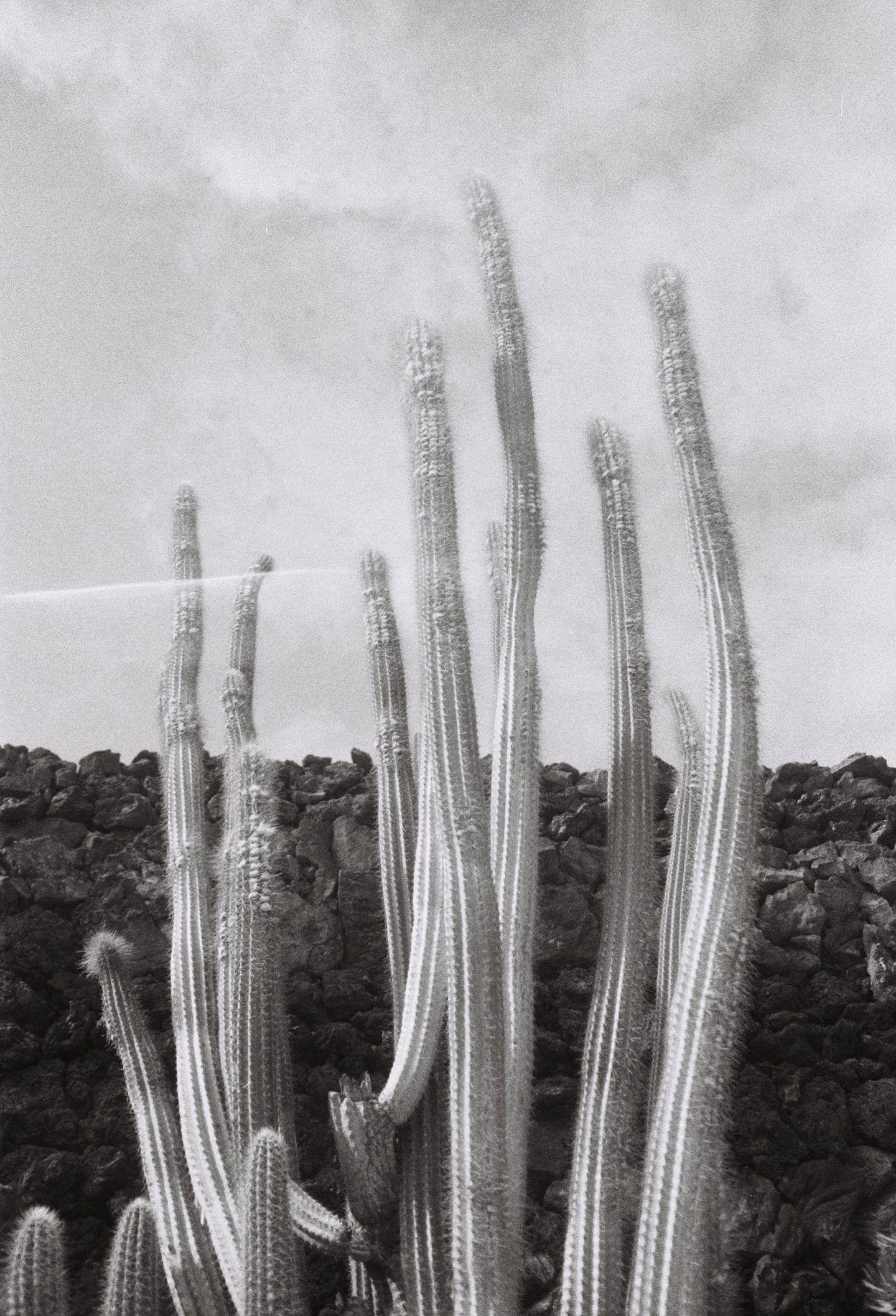 IGNANT-Photography-Arturo-Bamboo-Lanzarote-37