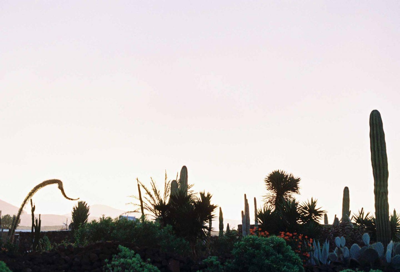 IGNANT-Photography-Arturo-Bamboo-Lanzarote-4