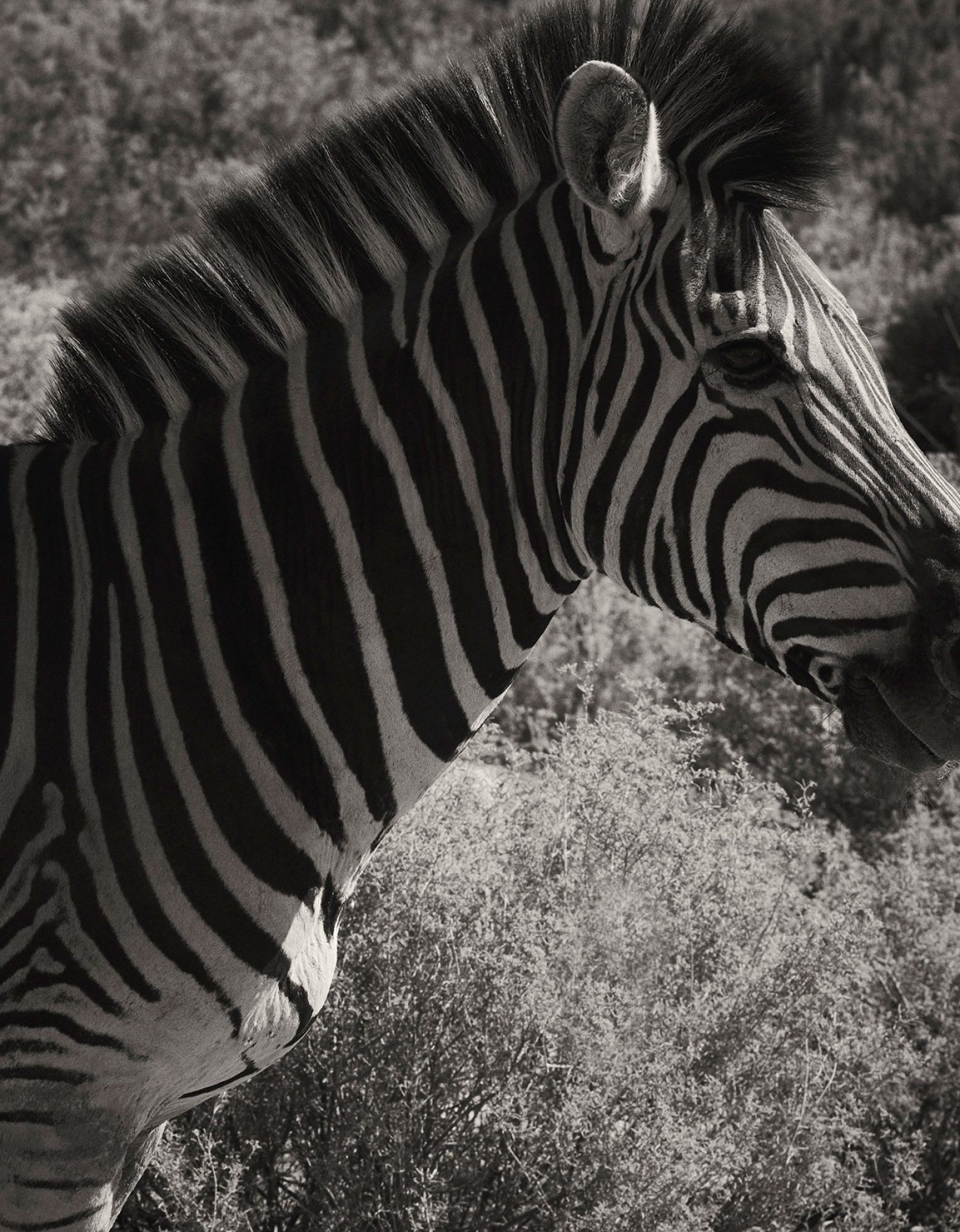 IGNANT-Photography-Laura-Palm-Zebra-1