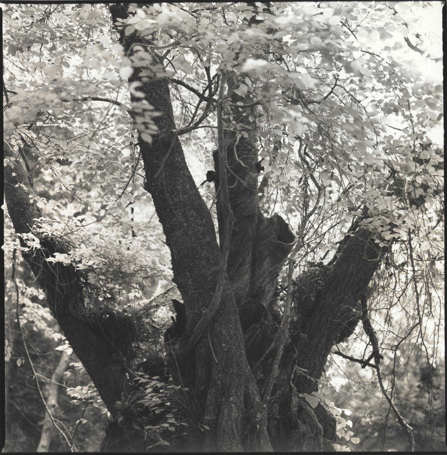 IGNANT-Photography-Hiroshi-Watanabe-Kwaidan-03